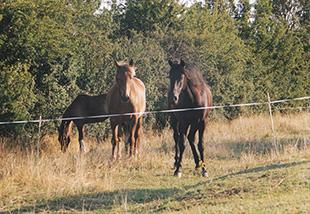 Equitation Loire